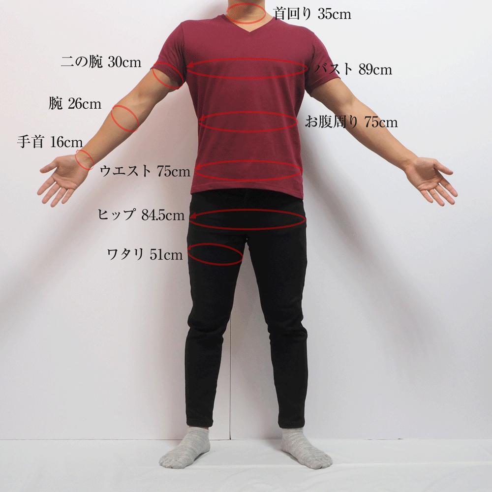 モデルの体型